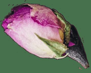 lormiellerie-pâtisserie-marocaine-fleur-pistache-seule